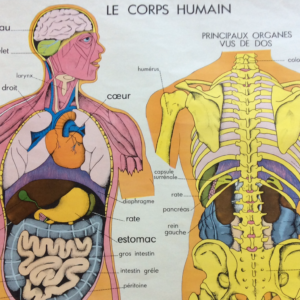 AFFICHES SCOLAIRES CORPS HUMAIN