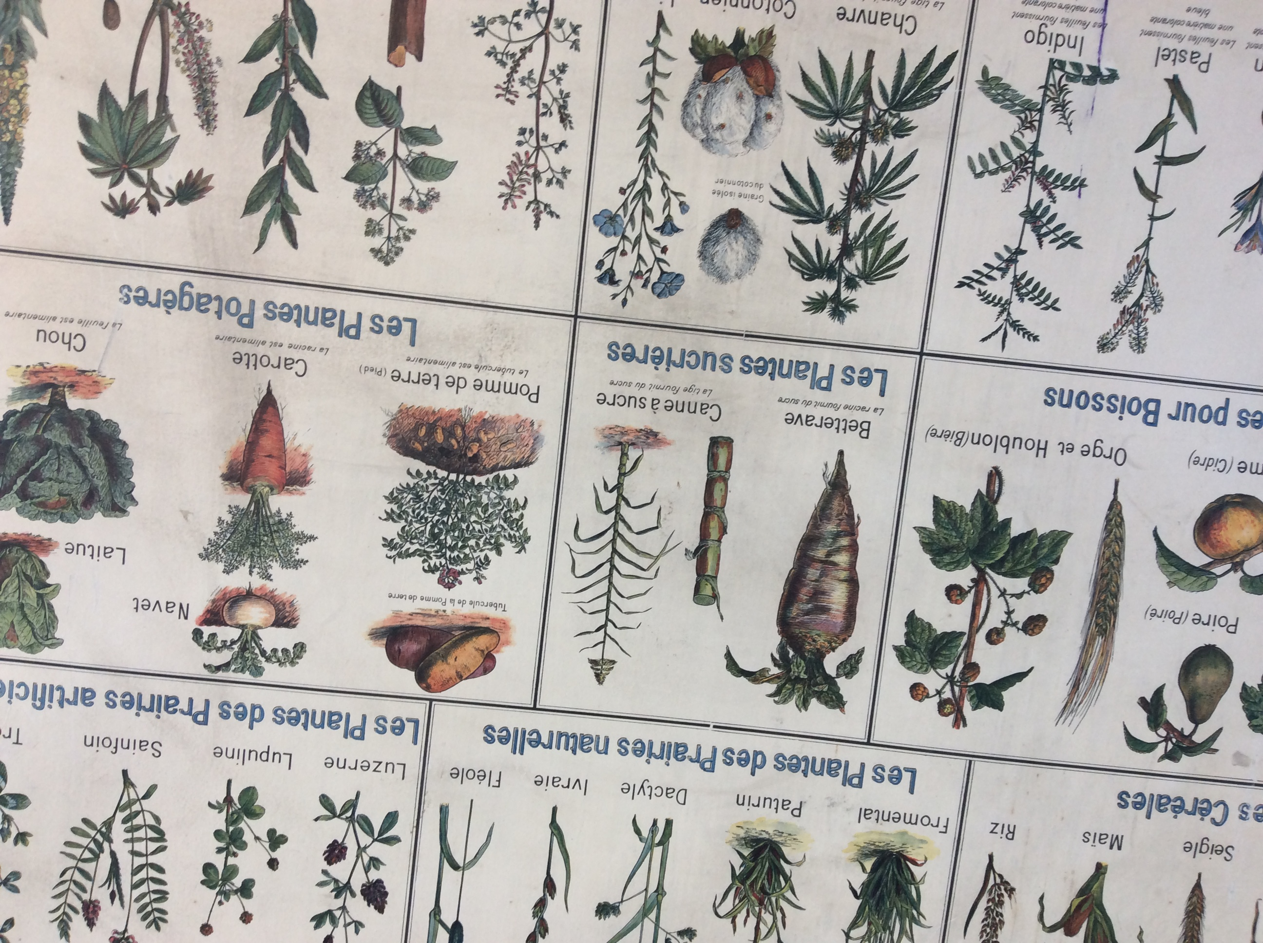Carte Scolaire Botanique Familles Végétales Plantes Utiles Déco Vintage