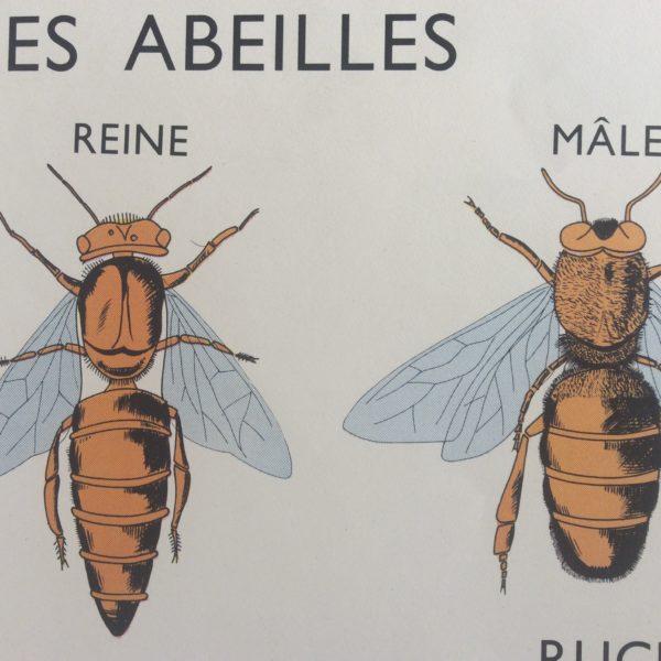 Affiche Scolaire Abeille Miel Ruche Enfumoir Déco