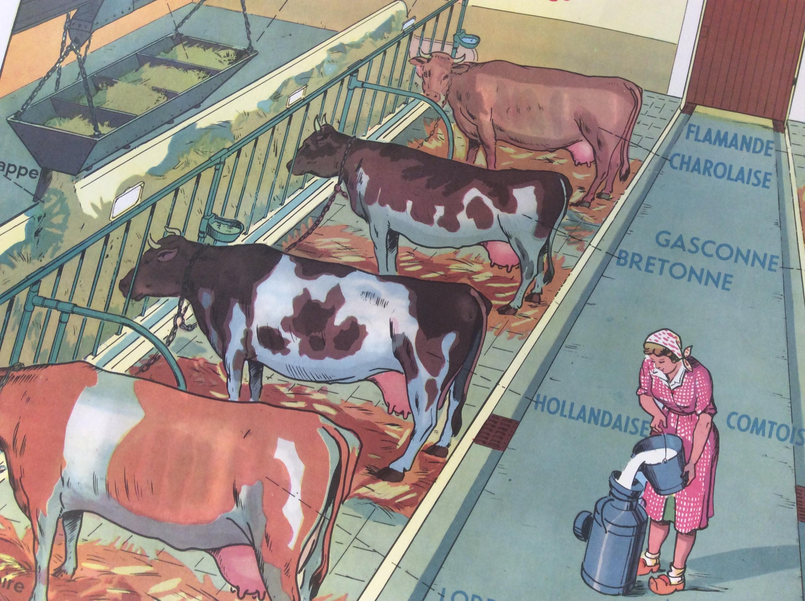 Affiche Scolaire École Vaches Étable Ferme Déco Vintage